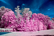 Infrared Posters - Autumn Trees in Infrared Poster by Louis Dallara