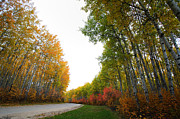 Park Scene Digital Art Prints - Autumn trees in Meadow Lake Park Saskatchewan Print by Mark Duffy