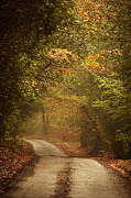 Autumn In The Country Posters - Autumn Trees Lining Rural Lane In Woods Poster by Ron Bambridge