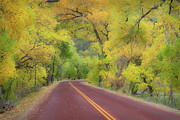 Yellow Line Photo Prints - Autumn Trees On Road Print by Royce Bair
