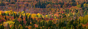 Red Leaves Posters - Autumn Trees Panorama Poster by Matt Dobson