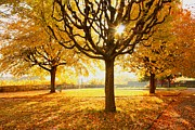 Lens Flare Prints - Autumn Trees Sunny Day Print by Ewa Ciebiera