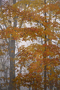 Rob Travis Prints - Autumn Tresses Print by Rob Travis