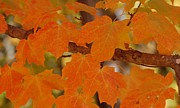 Fall Leaves Glass Art Posters - Autumn Poster by Trice Jacobs