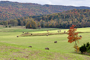 Autumn Valley Hay Bales Print by Jan Amiss Photography