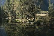Spring Views Posters - Autumn View Along The Merced River Poster by Marc Moritsch