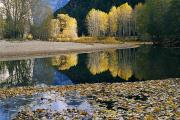 Autumn Foliage Photos - Autumn View, Merced River, Yosemite by Marc Moritsch