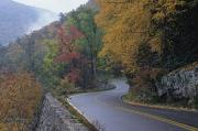 Woodland Scenes Posters - Autumn View Of A Road Winding Poster by Medford Taylor