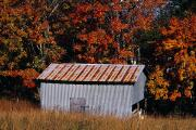 Metal Roofs Posters - Autumn View Of An Old Tin Barn Poster by Raymond Gehman