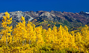 Pauls Colorado Photography Prints - Autumn View Print by Paul Gana