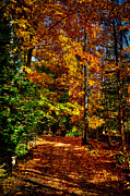 Autumn Walk Print by David Patterson