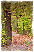 Tree Art Print Framed Prints - Autumn Walk - IMPRESSIONS Framed Print by Ricky Barnard