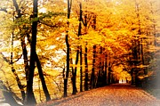 Yellow Leaves Prints - Autumn Walk in Belgium Print by Carol Groenen