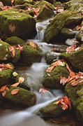Fall Colors Autumn Colors Posters - Autumn Water Movement Poster by Stephen  Vecchiotti