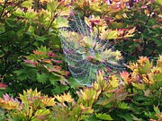 Helen  Campbell - Autumn Web