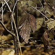 Autumn Whispers Print by Bonnie Bruno