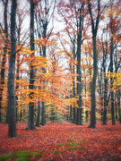 Autumn Photos Digital Art Prints - Autumn Whispers I Print by Artecco Fine Art Photography - Photograph by Nadja Drieling