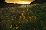 Indiana Autumn Metal Prints - Autumn Wildflower Sunset - D007757 Metal Print by Daniel Dempster