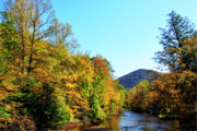 Mountain Stream Photo Posters - Autumn Williams River Poster by Thomas R Fletcher