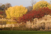 Nature Scene Photo Originals - Autumn Willow Trees by Elvira Butler