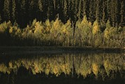 Prince Albert National Park Photos - Autumnal Beauty Reflected In A Still by Raymond Gehman