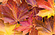 Frond Framed Prints - Autumnal Carpet Framed Print by Meirion Matthias