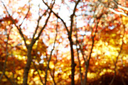 Blurred Framed Prints - Autumnal forest  Framed Print by Les Cunliffe