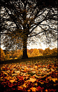 Lenny Carter Framed Prints - Autumnal Park Framed Print by Lenny Carter