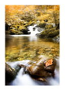 Trout Stream Landscape Prints - Autumnal Stream Print by Mal Bray