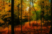 Nature - Autumns Allure by Anthony Rego