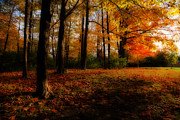 Autumn. Fall Colors - Autumns Ambience by Anthony Rego