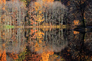 """autumn Reflection"" Photos - Autumns Art by Karol  Livote"