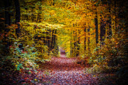 Nature - Autumns Canopy by Anthony Rego