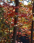 Autumn's Delight Print by Diane E Berry