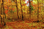 Abstract Impressionism Photo Prints - Autumns Magic Print by Bill Morgenstern