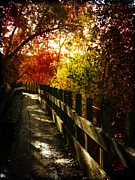 Photomanipulation Photo Originals - Autumns Rainbow by Leah Moore
