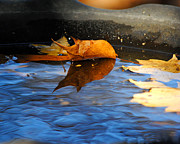 Autumn Foliage Photos - Autumns Reflection by Jai Johnson