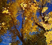 Yellows Framed Prints - Autumns Reflections Framed Print by Steven Milner