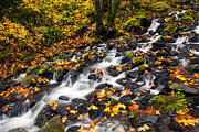 Columbia River Prints - Autumns Staircase Print by Mike  Dawson