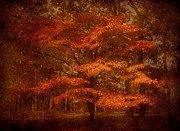 Red Maple Trees Posters - Autumns Tradition - Ocean County Park Poster by Angie McKenzie