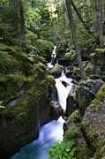 Mountain Stream Photo Posters - Avalanche Gorge Glacier National Park Poster by Rich Franco