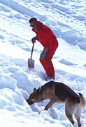Service Dog Prints - Avalanche Rescue Print by Mauro Fermariello