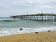 Avalon Fishing Pier Print by Eve Spring