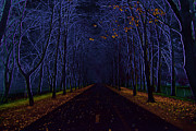 Creepy Digital Art Posters - Avenue Of Trees Poster by Michal Boubin