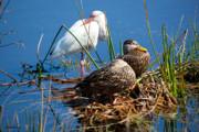 Michelle Wiarda - Avian Siesta Time at Green Cay Boynton Beach Florida