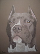 Pitbull Art - Axl by Stacey Jasmin