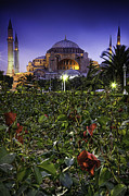 Istanbul Digital Art Posters - Aya Sofya on a Bed of Roses Poster by Jose Vazquez