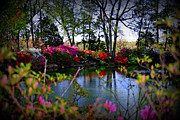 Azalea Bush Photo Prints - Azalea Festival Print by Valerie Clanton