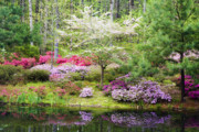 Dogwood Posters - Azalea Heaven Poster by Eggers   Photography
