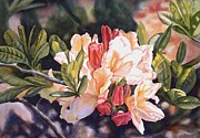 Azaleas Posters - Azalea in Gold Tones Poster by Sharon Freeman